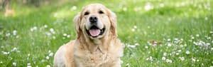 CBD for Pets header